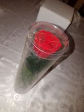 Forever Rose That Last A Year Red Individual w Stem