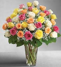 Ultimate Elegance 3 DZ Premium Long Stem Assorted Roses