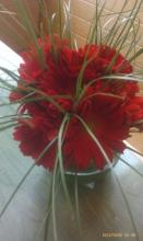 Elegant Red Gerber Daisies With Dainty Bear Grass Delivered to T