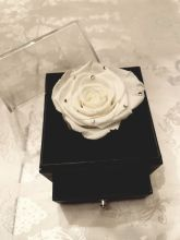 Forever Love Rose That Lasts A Year Individual White Diamonds